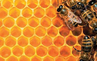 Ηλεκτρονικό Δίκτυο Μελισσοκομίας- Το περιεχόμενο της Δράσης 1.2