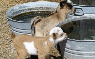 Η Αιτωλοακαρνανία πρωταγωνιστεί στην κτηνοτροφία. Κλάδος με παρελθόν, παρόν και μέλλον...