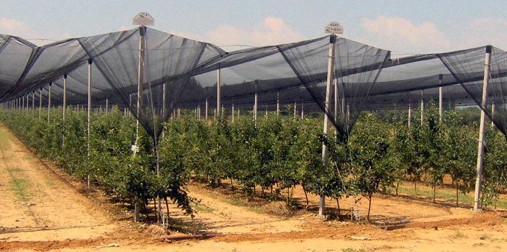 Νέες καλλιέργειες, καινοτόμες πρακτικές, ολοκληρωμένη διαχείριση