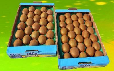 Το προϊόν εξάγεται σε χώρες της Ευρωπαϊκής Ένωσης, κυρίως. Η ποιότητα της παραγωγής στην Αιτωλοακαρνανία είναι εξαιρετική.
