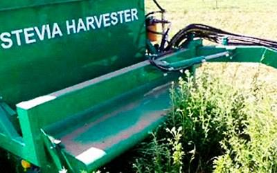 Harvesting is done mechanically.
