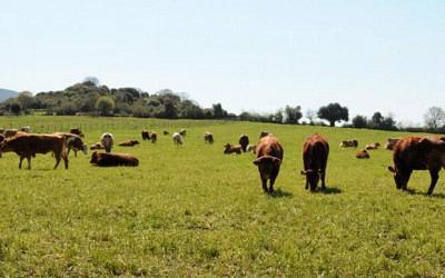 Η Ένωση Αγρινίου, αξιοποιώντας κάθε διαθέσιμο εργαλείο, συνέβαλε αποφασιστικά στο να αναδειχθεί η Αιτωλοακαρνανία στο νομό που πρωταγωνιστεί στην βιολογική γεωργοκτηνοτροφία.