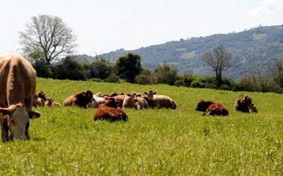 Βιολογική Γεωργία-Κτηνοτροφία