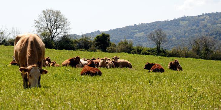 Η Αιτωλοακαρνανία πρωταγωνιστεί στη βιολογική κτηνοτροφία. Όχι τυχαία...