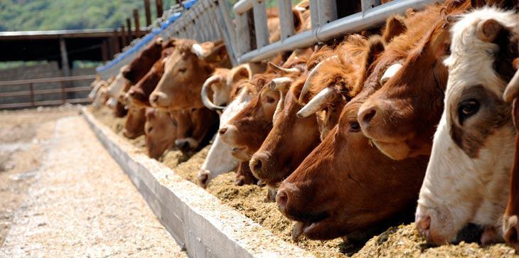 Ολοκληρωμένες λύσεις απ' την Ένωση Αγρινίου και στη σταβλισμένη κτηνοτροφία