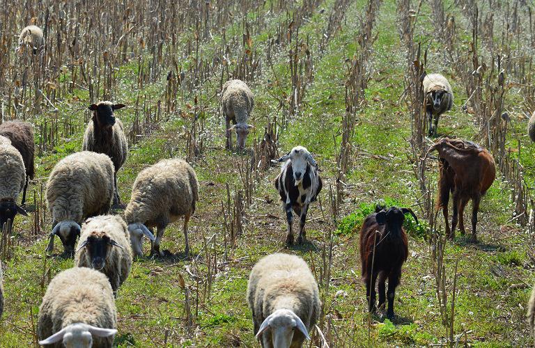 Αιτωλοακαρνανία: Πληρωμές 4.958.282,60 ευρώ σε 823 δικαιούχους βιολογικής κτηνοτροφίας