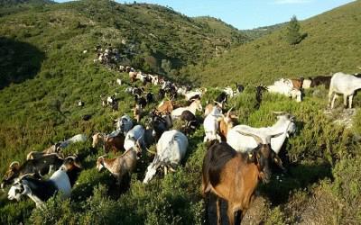 Κατανομή βοσκήσιμων εκτάσεων στους κτηνοτρόφους της Περιφέρειας Δυτικής Ελλάδας