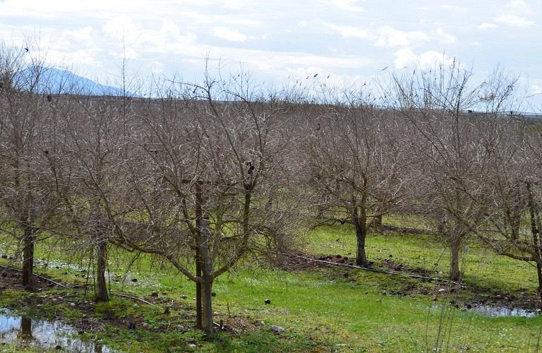 δέντρα εα ΦΜ  (1)