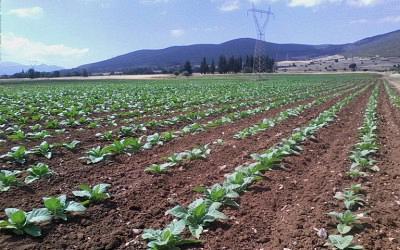 Βιολογικές Καλλιέργειες και Συμβάσεις με συμβούλους 2ου έτους
