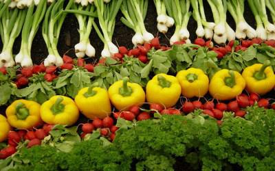 Πανευρωπαϊκή διαβούλευση για την αλυσίδα εφοδιασμού τροφίμων