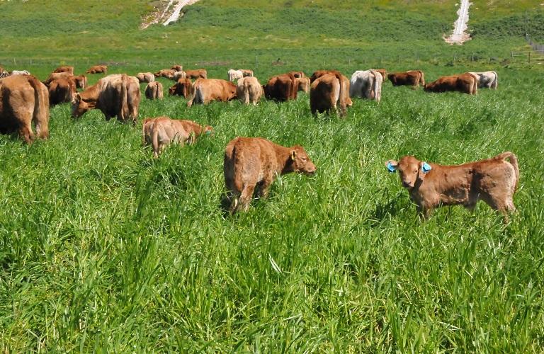 βοοειδη ενωση αγρινιου (1)