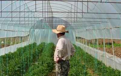 Εγκατάσταση νέων γεωργών