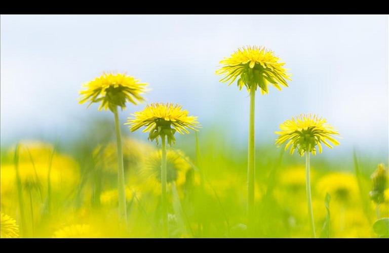 Τι είναι ο Φυτοϋγειονομικός Έλεγχος
