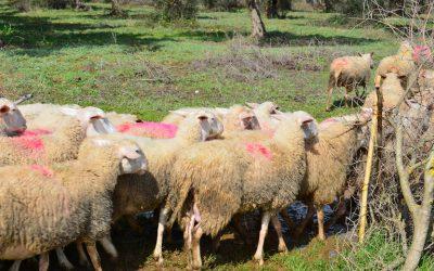 Νέα μετάθεση για τη Βιολογική Κτηνοτροφία-Από 30 Μαρτίου οι αιτήσεις