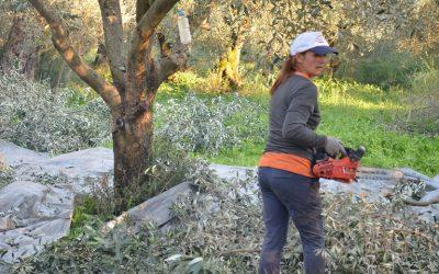 Νέοι Αγρότες: Ενάχθηκαν ακόμη 177 στη Δυτική Ελλάδα – Εκτός Προγράμματος 317 επιλαχόντες