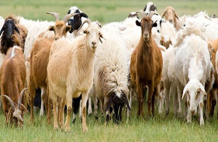 Από 26 Μαρτίου οι αιτήσεις για τη βιολογική κτηνοτροφία