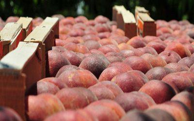 191 εκατ. ευρώ από την Ε.Ε. για προώθηση αγροτικών προϊόντων