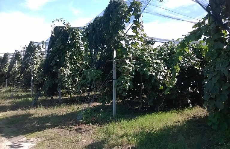 Ανακοίνωση Αγροτικού Συνεταιρισμού Ν. Αιτωλ/νίας