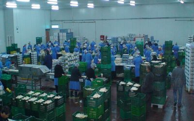Α.Σ. ΑΧΕΛΩΟΣ: Πρόσληψη εργατών για το συσκευαστήριο στη Γουριά