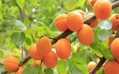 Δενδρώδεις καλλιέργειες-Εποχιακές συμβουλές