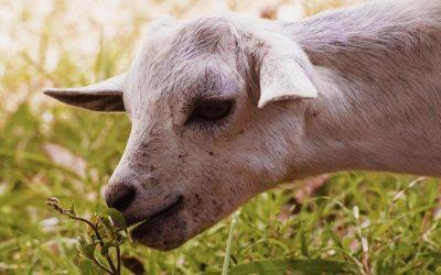 Ποιοτική ζωοτροφή συμβάλλει στην καλή διαβίωση των ζώων