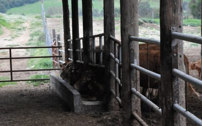 Η διαδικασία για την άδεια διατήρησης κτηνοτροφικών εγκαταστάσεων