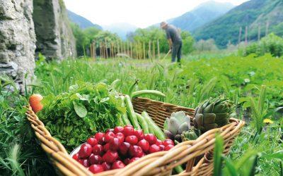 Διαρθρωτικές αλλαγές και διακλαδικές συνδέσεις στον αγροτικό τομέα