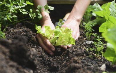 Εγκύκλιος για την ανάκληση ένταξης στο Μέτρο 11- Βιολογικές καλλιέργειες