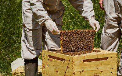Προθεσμία δήλωσης διαχείμασης των μελισσών