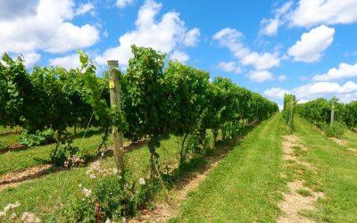 Γεωργικές Προειδοποιήσεις Φυτοπροστασίας για το αμπέλι