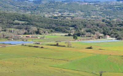 ΝΕΑ ΠΑΣΕΓΕΣ: Θα είναι τεράστιο λάθος η επιβολή ΕΝΦΙΑ στα χωράφια