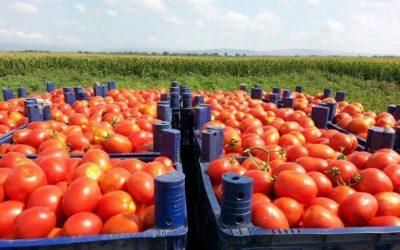 Ενημέρωση για επιβλαβή οργανισμό καραντίνας στις τομάτες
