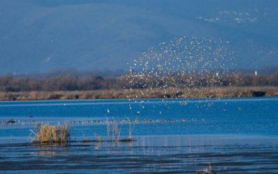 Νέα Υπουργική Απόφαση για τις ρυθμίσεις θήρας στο Εθνικό Πάρκο Υγροτόπων Αμβρακικού