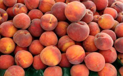 Οι Συνδεδεμένες για μήλα, βιομηχανική τομάτα και συμπύρηνα ροδάκινα