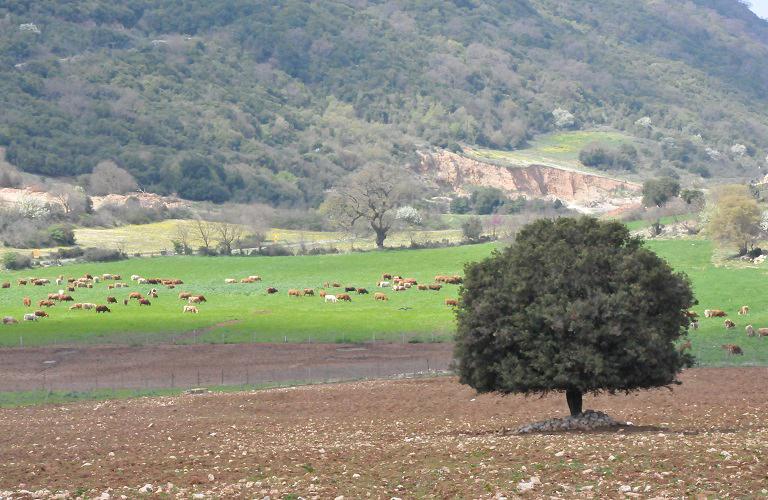 Περισσότερες εκτάσεις στα βοσκοτόπια- Εγκρίθηκε ο νέος ορισμός