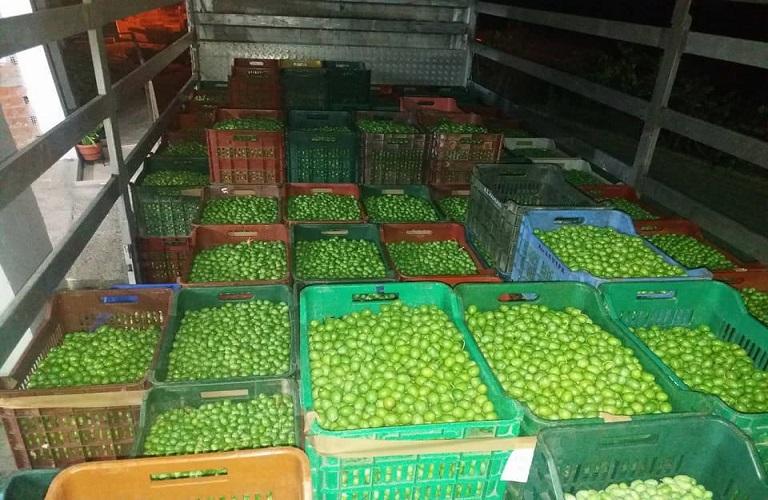 Τιμές πράσινων ελιών