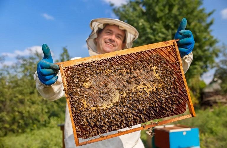 «Εκπαιδεύσεις Μελισσοκόμων»