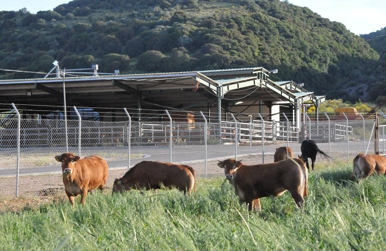 Τι αλλάζει στην ίδρυση και λειτουργία κτηνοτροφικών εγκαταστάσεων
