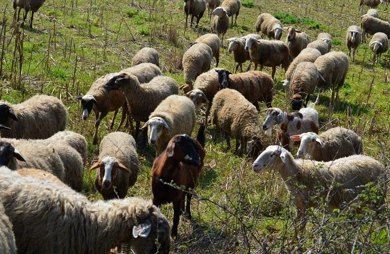 19,6 εκατ. ευρώ για την προστασία του ζωικού κεφαλαίου της χώρας