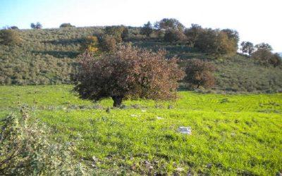Γεωργία - κτηνοτροφία: οι δείκτες τιμών για τον Δεκέμβριο