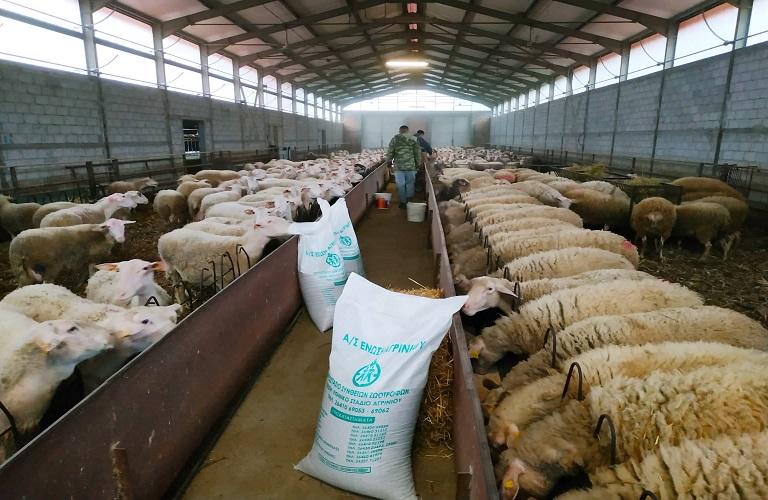 Αιγοπρόβατα και η σωστή διατροφή τους
