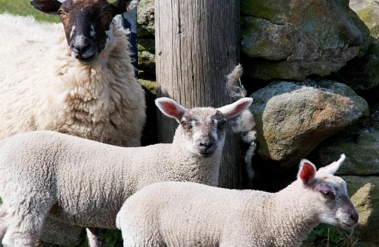 Αφθώδης Πυρετός: αναλυτικά όλα όσα πρέπει να γνωρίζουν οι κτηνοτρόφοι