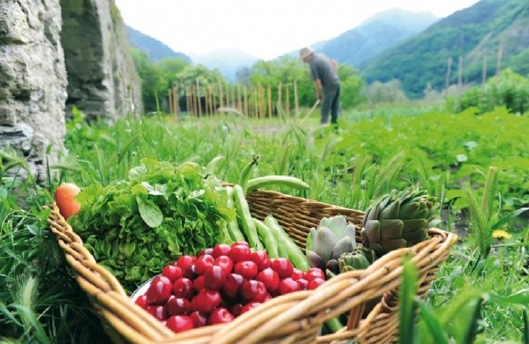Βιολογικές Καλλιέργειες: η Προδημοσίευση του νέου προγράμματος