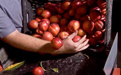 Παράτυπα διαμένοντες εργάτες γης: η κατανομή τους ανά εκμετάλλευση