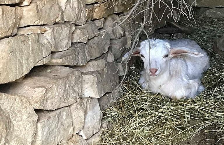 Τροποποίηση για τη Δράση 10.2.1 «Γενετικοί πόροι στην κτηνοτροφία»