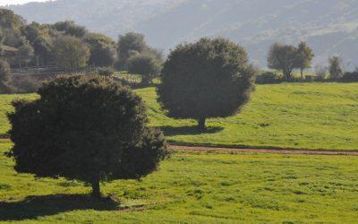 Δείκτες τιμών εισροών και εκροών στη γεωργία – κτηνοτροφία: Ιούνιος 2019