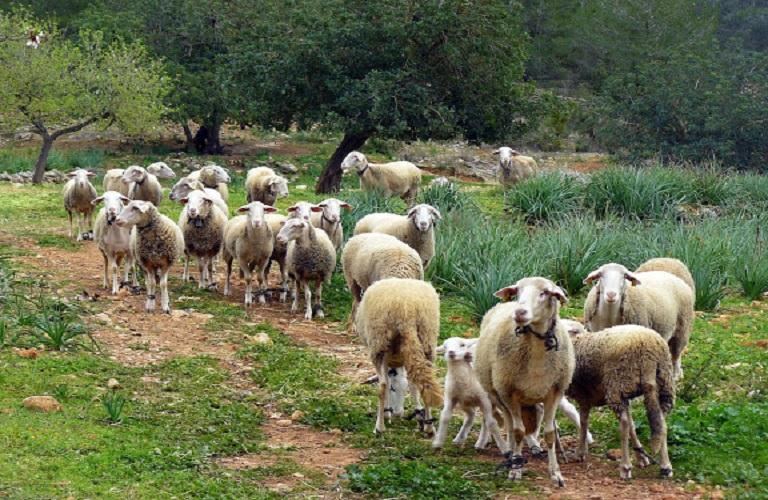 Βιολογική Κτηνοτροφία: ξεκίνησαν πληρωμές και στην Αιτωλοακαρνανία