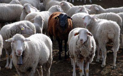 Ενημέρωση για τη λιστερίωση στα αιγοπρόβατα