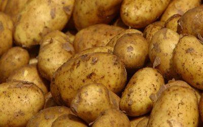 Πατάτα: προστασία από Περονόσπορο και Φθοριμαία