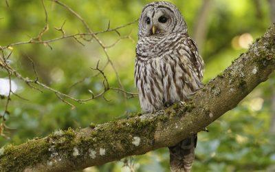 Συνεχίζονται για λίγες ακόμη ημέρες οι αιτήσεις για την «Προστασία της άγριας ορνιθοπανίδας»
